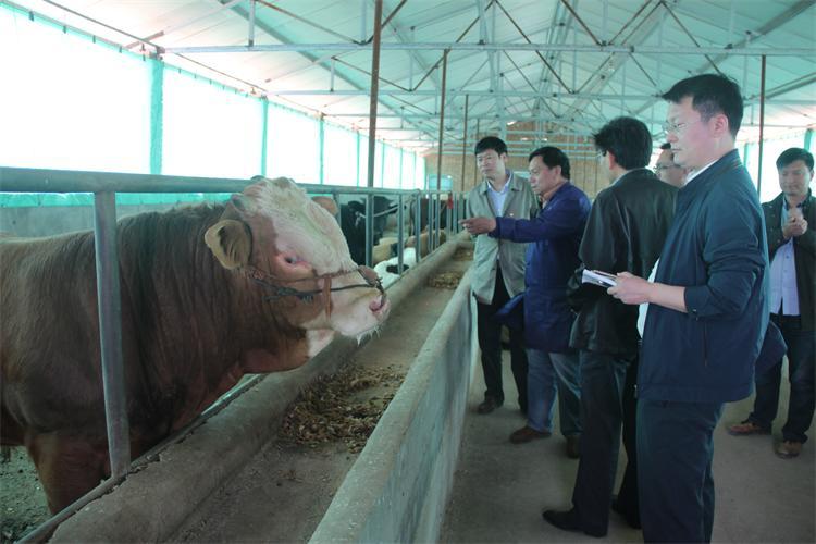 省畜牧局督导我县畜禽养殖污染攻坚战开展情况